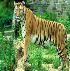 Best of Wildlife of India